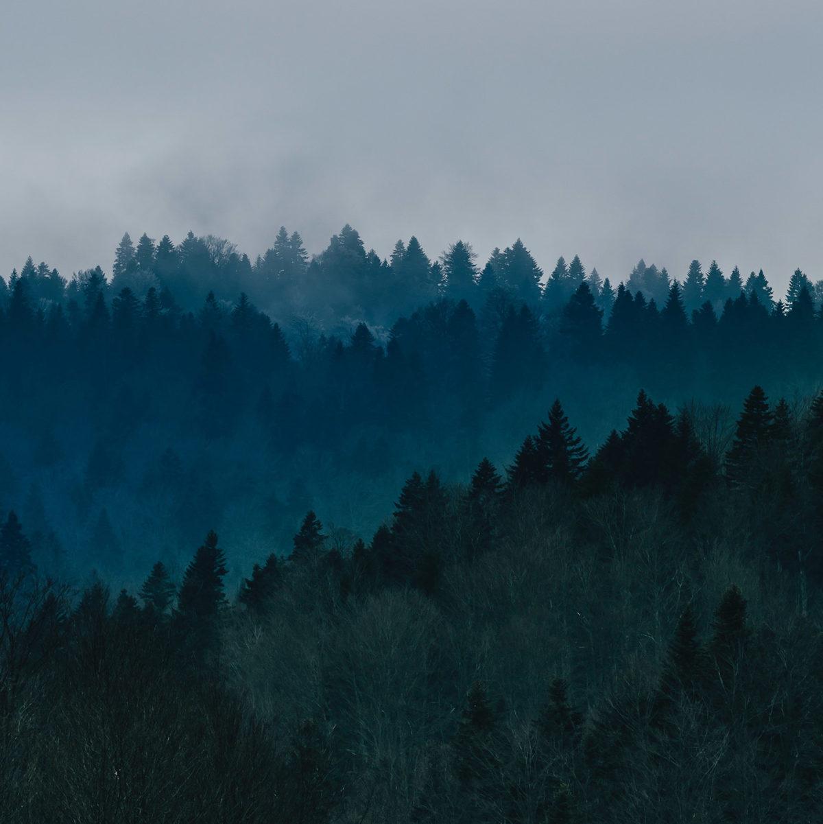 Bosco azzurro valore ambiente